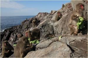 猿島 場所