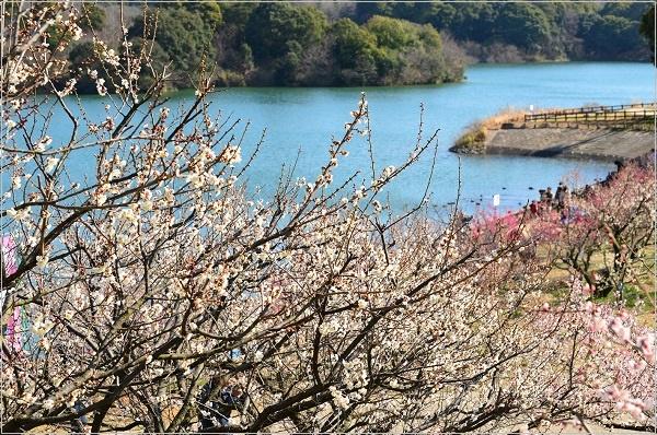 池の水ぜんぶ抜く 愛知県 場所 どこ